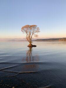 Tree Anne Chrisp